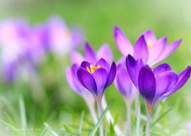 spring_flower_by_raylau-d4rremu